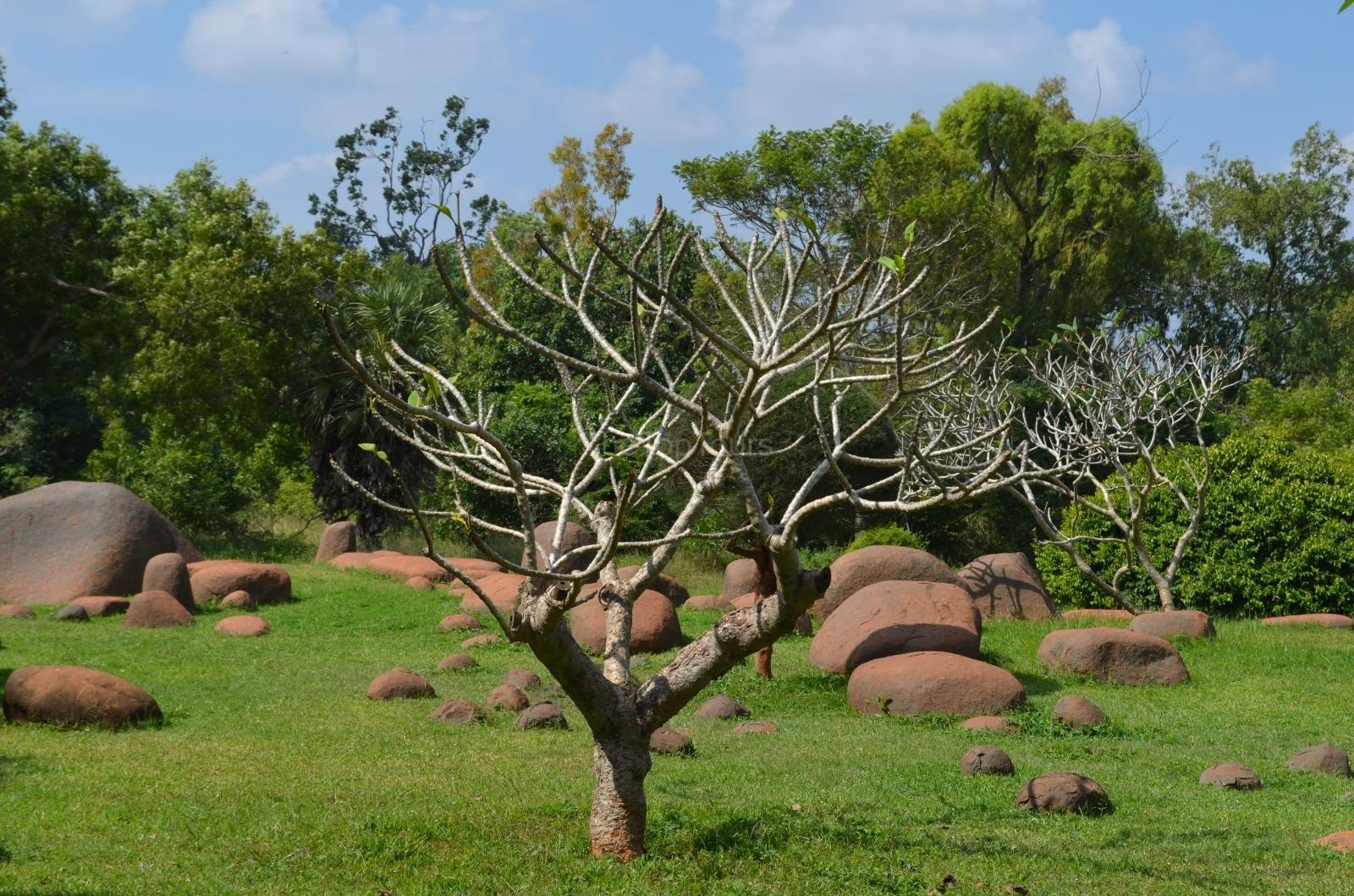The Ground of Auroville Tree Near, Pondicherry