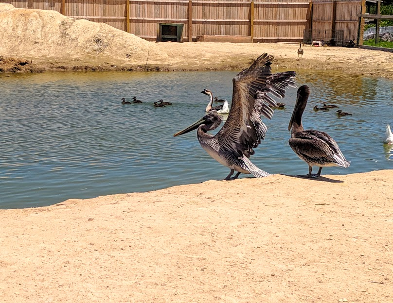 Attraction Place to Visit in Georgetown, Delaware-3 Palms Zoo