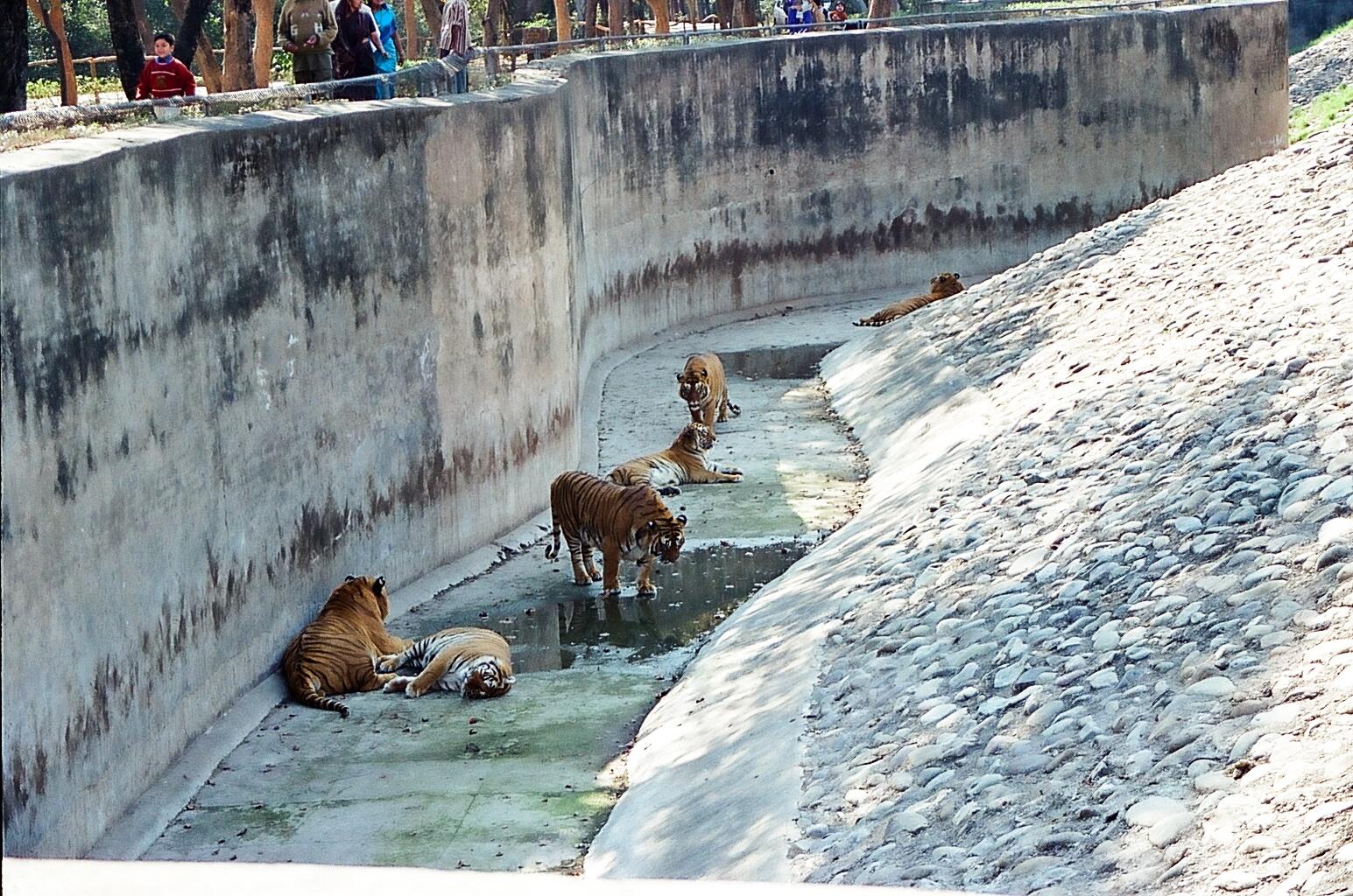 Visit Chattbir Zoo - Patiala