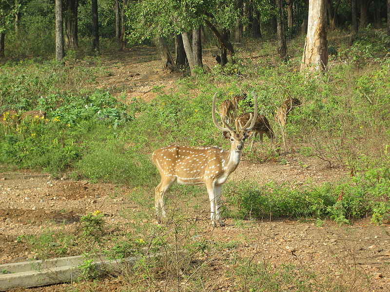 Deer Park - Beautiful Place Near Kinnerasani Dam