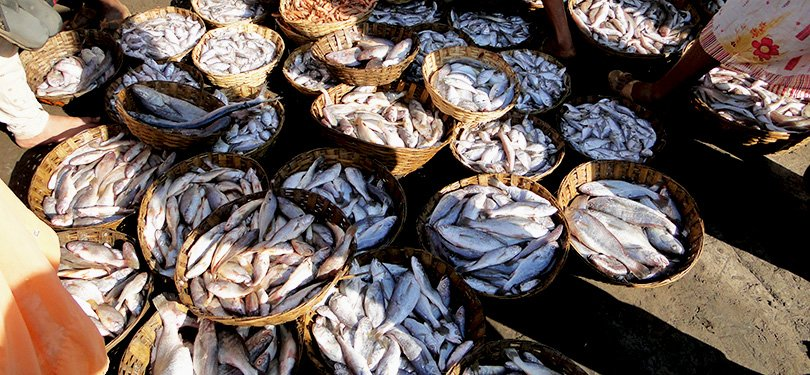 Famous Place To Visit Near Suvarnadurg - Harnai Fish Market