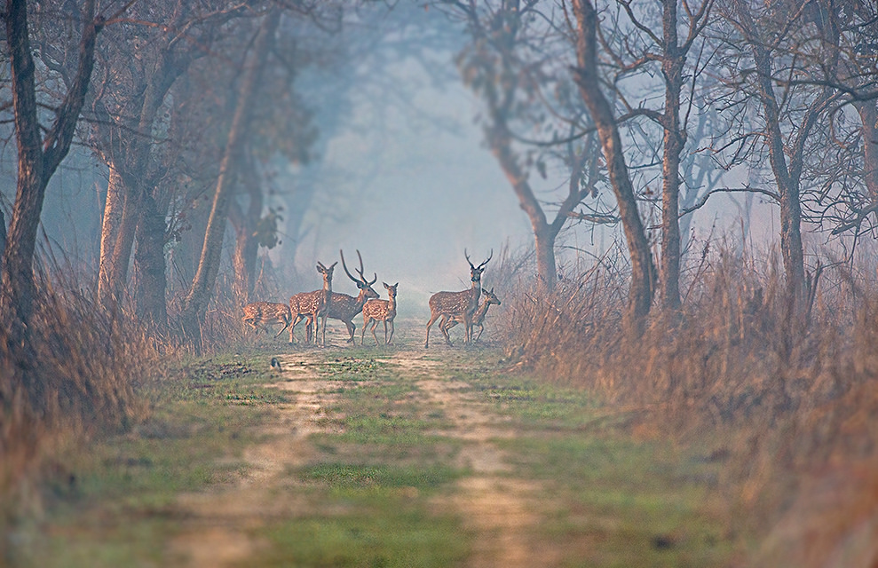 How to Reach Dudhwa National Park