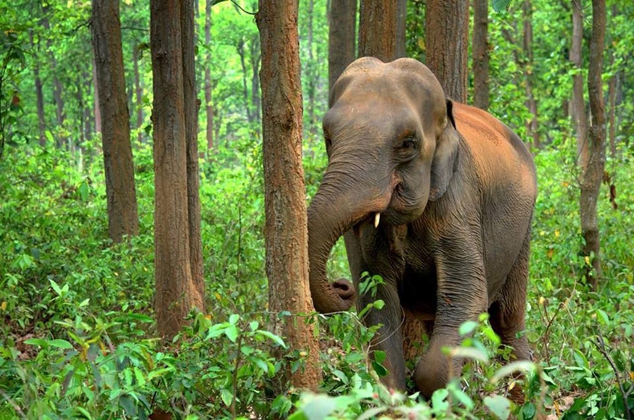 Top Destination In The Region Of North Assam-Nameri National Park, Sonitpur