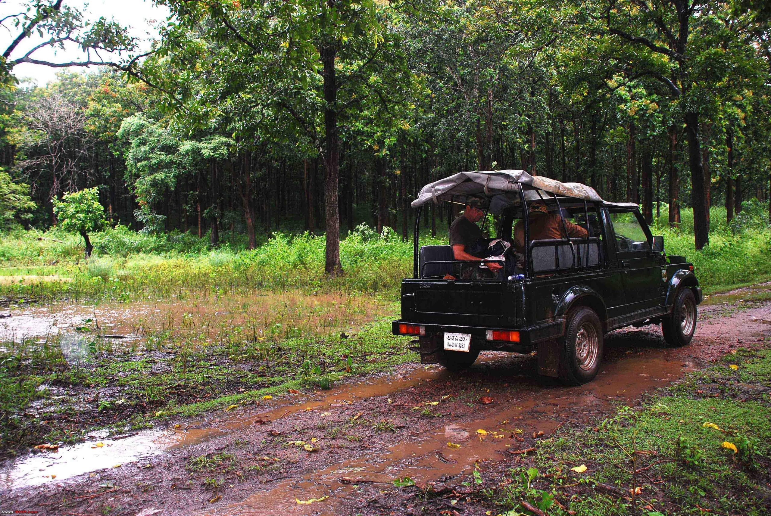 Open Jeep Safari at Bandipur National Park