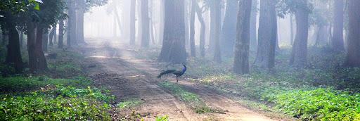 Sightseeing at Pilibhit Tiger Reserve