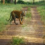 Achanakmar Wildlife Sanctuary - Must Visit Wildlife Sanctuaries in Chhattisgarh