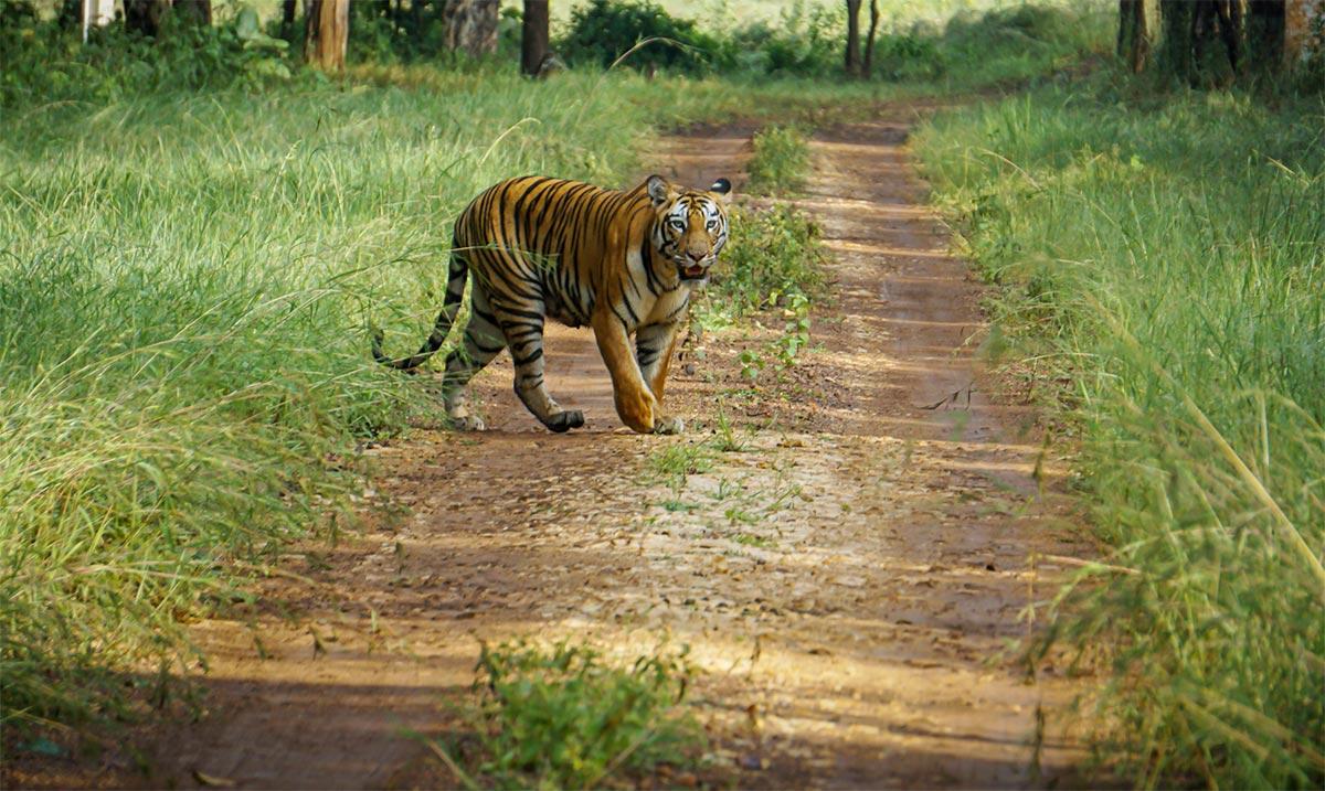 Achanakmar Wildlife Sanctuary - Must Visit Wildlife Sanctuaries in Chhattisgarh