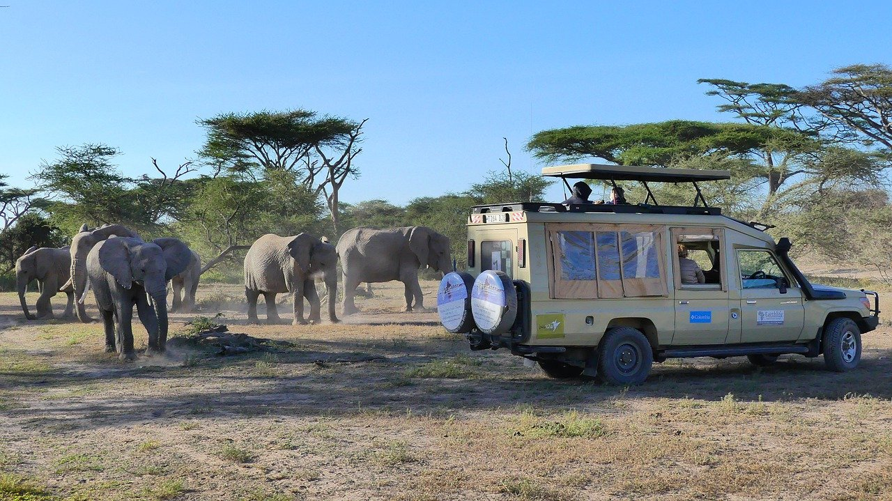 Must-Do Things When in Santa Rosa - Book Your Family an African Safari on the Safari West