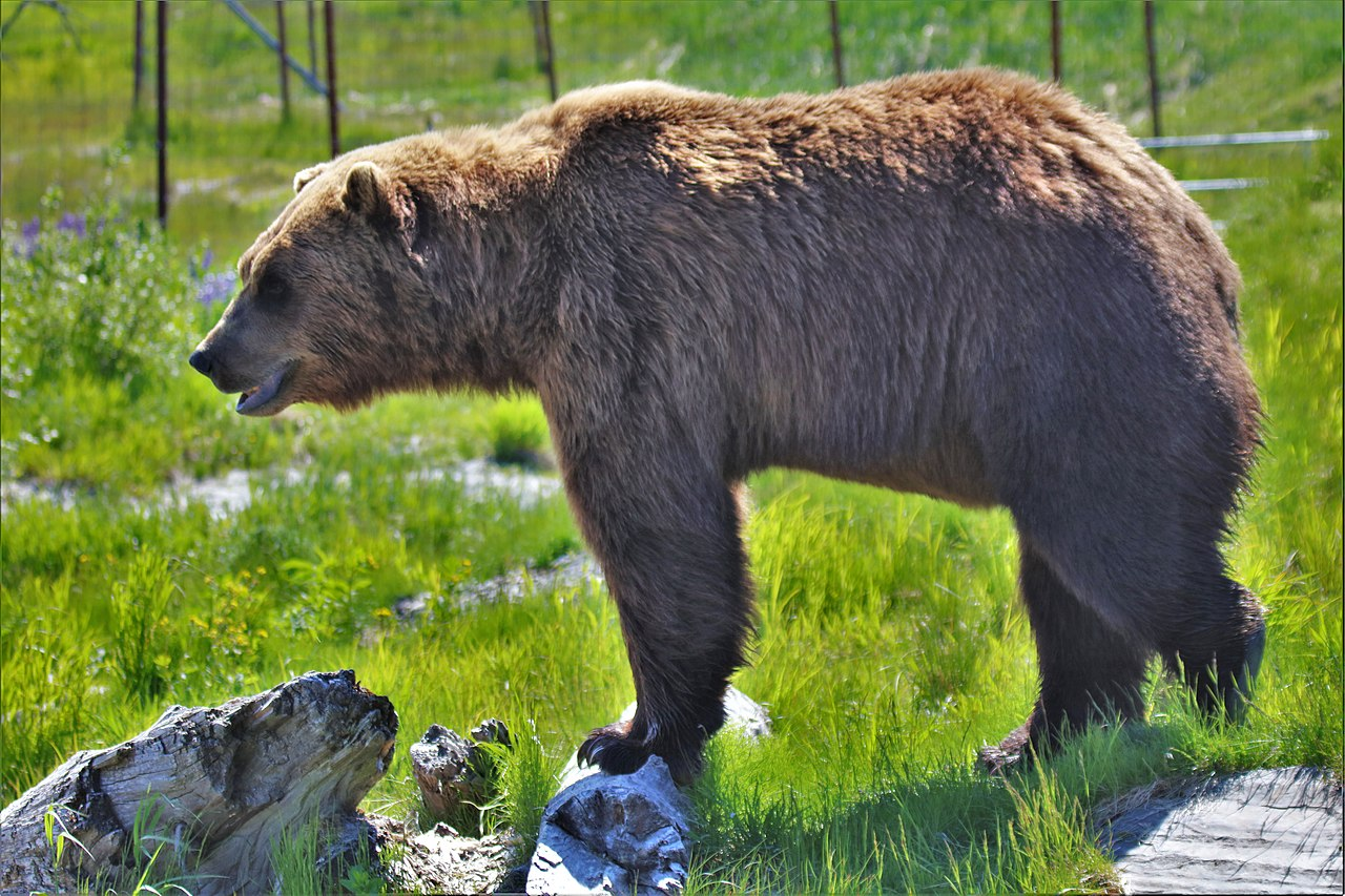 Incredible Place To Visit In Anchorage, Alaska-Wildlife Conservation Center