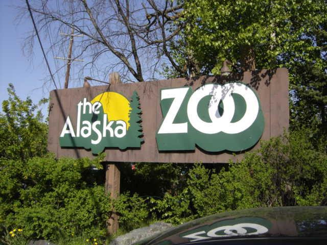Beautiful Place to Visit In Anchorage, Alaska-Alaska Zoo