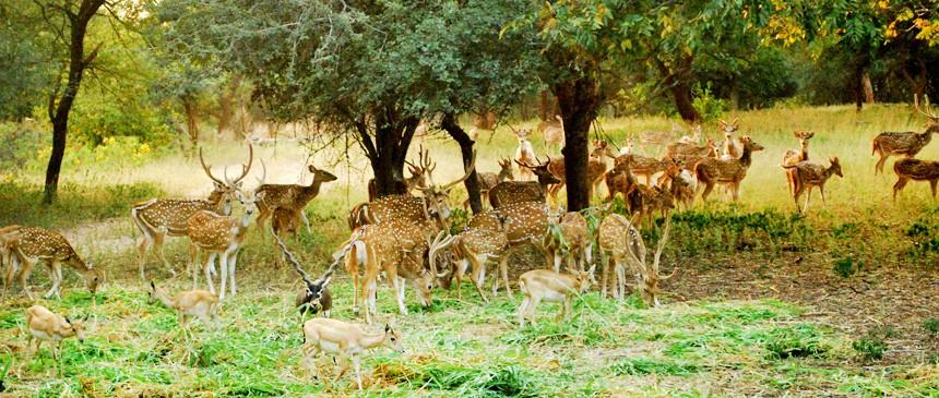 Telangana Wildlife Tourism-Ali Sagar Deer Park