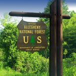 Allegheny National Forest - Most Stunning State Forest and Natural Area To Visit In Pennsylvania