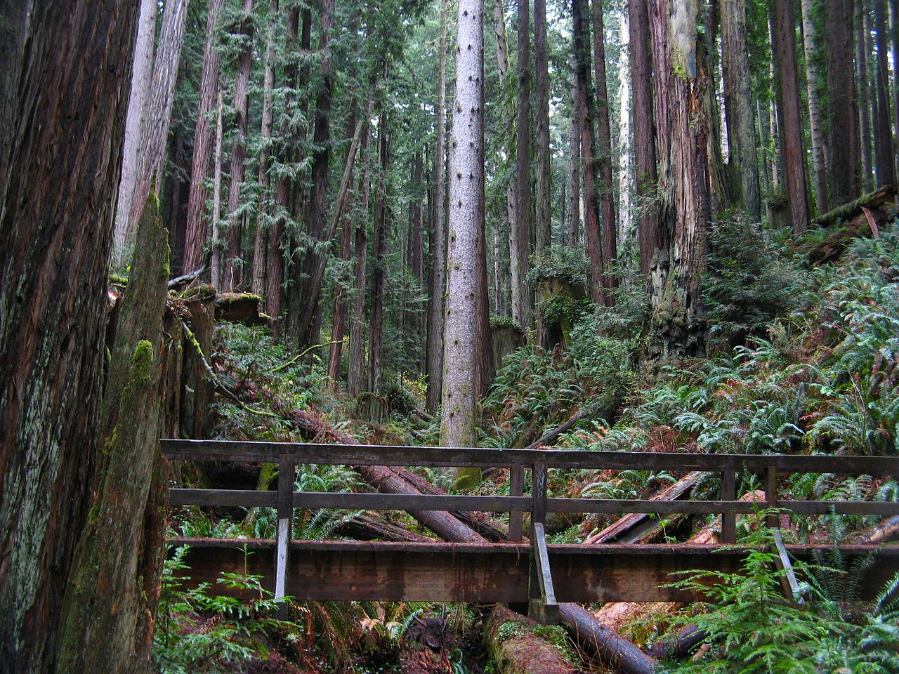 Places To Visit and Things To Do In Arcata