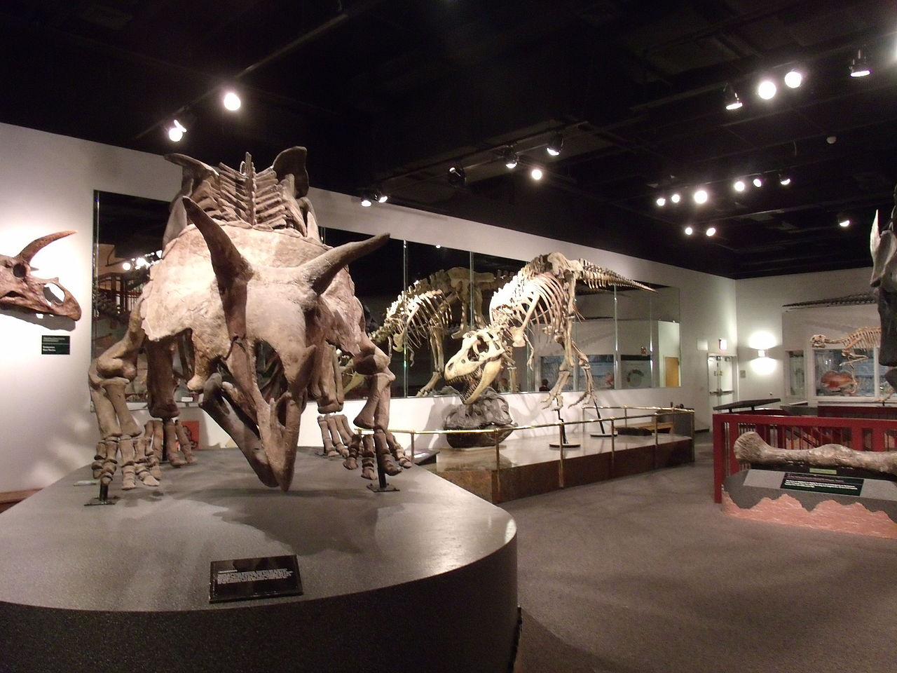 Famous Place To Visit In Mesa-Arizona Museum of Natural History
