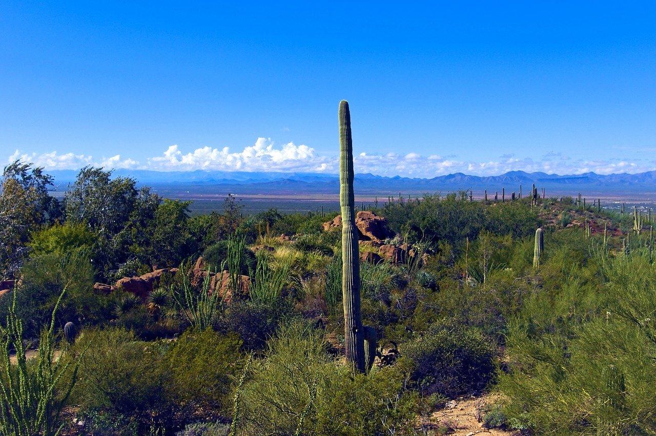 Best Place To Visit In Tucson-Arizona-Sonora Desert Museum