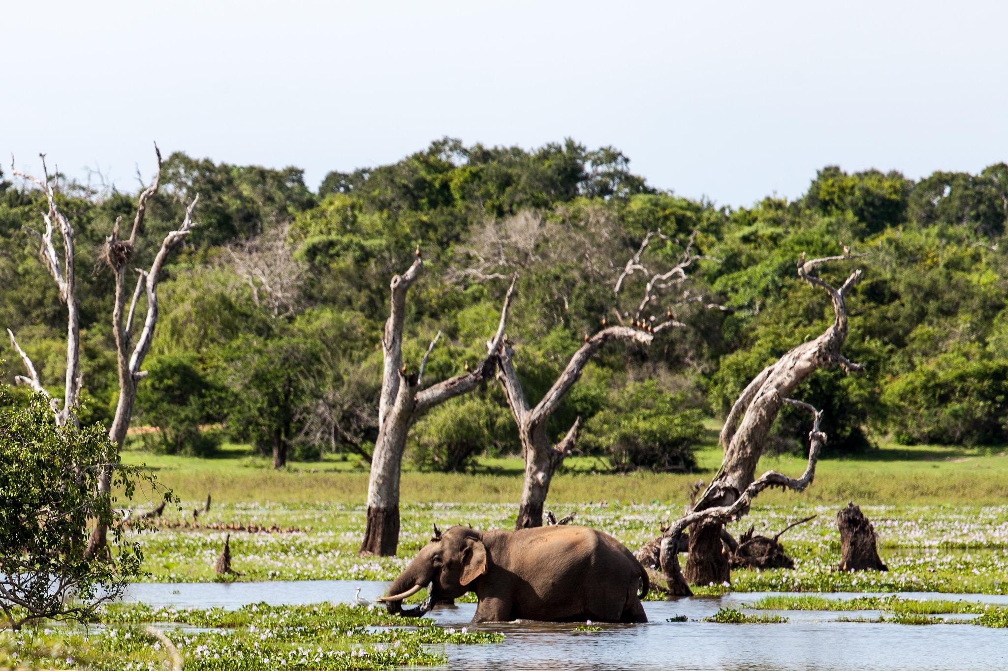 Asia's Wildlife Hotspot-Reason to Visit Sri Lanka Will Amaze You
