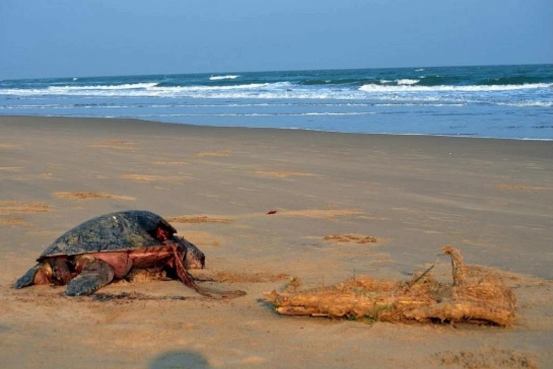 Astaranga Beach - Best Beaches Near Bhubaneswar That are the Pride of Odisha