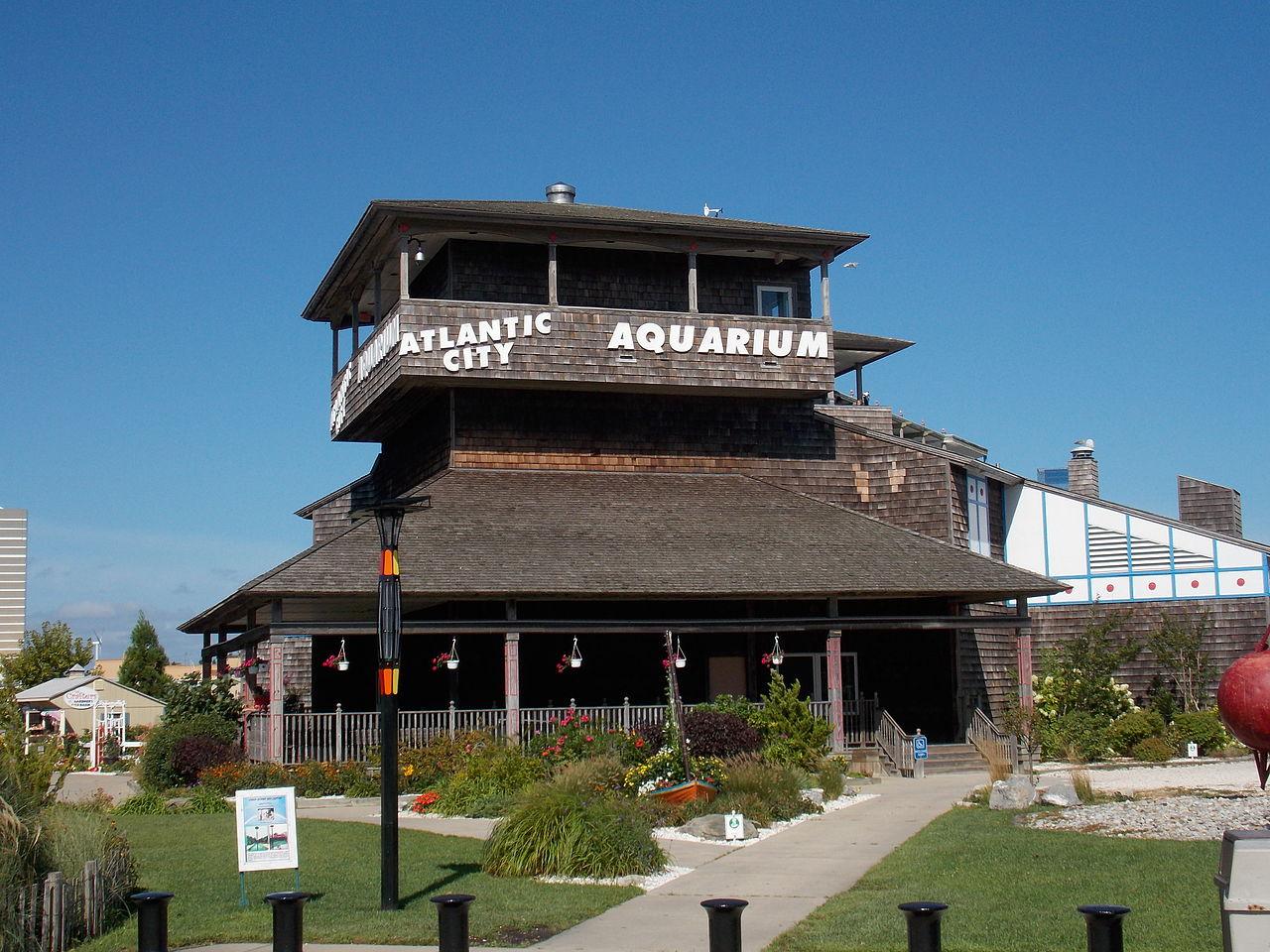 Atlantic City Aquarium -Amazing Attraction to Visit in Atlantic City