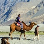 Bactrian Camel Safari - Place To See and Things To Do In Nubra Valley