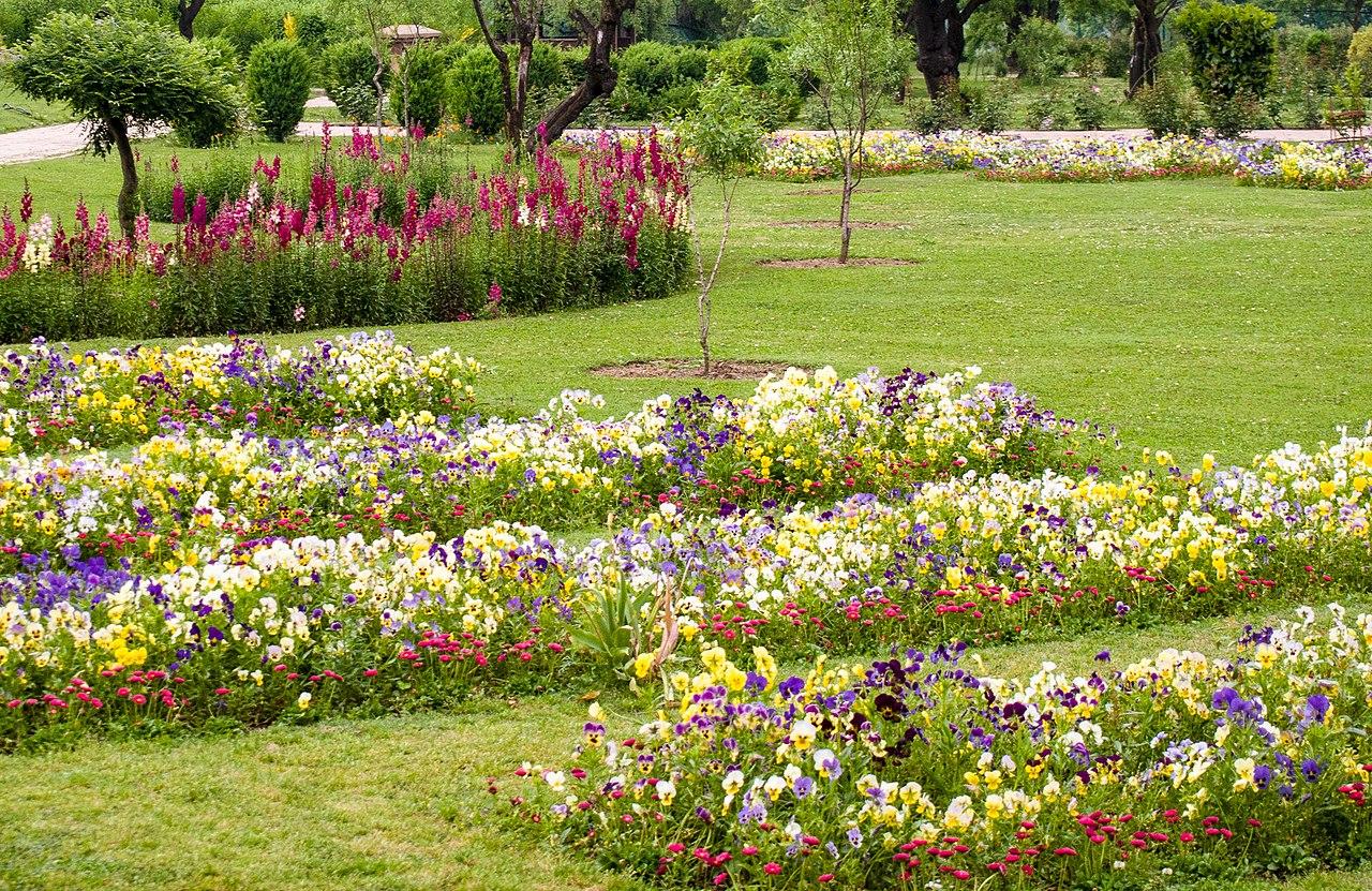 Beautiful Place to Visit in Srinagar-Badamwari Garden