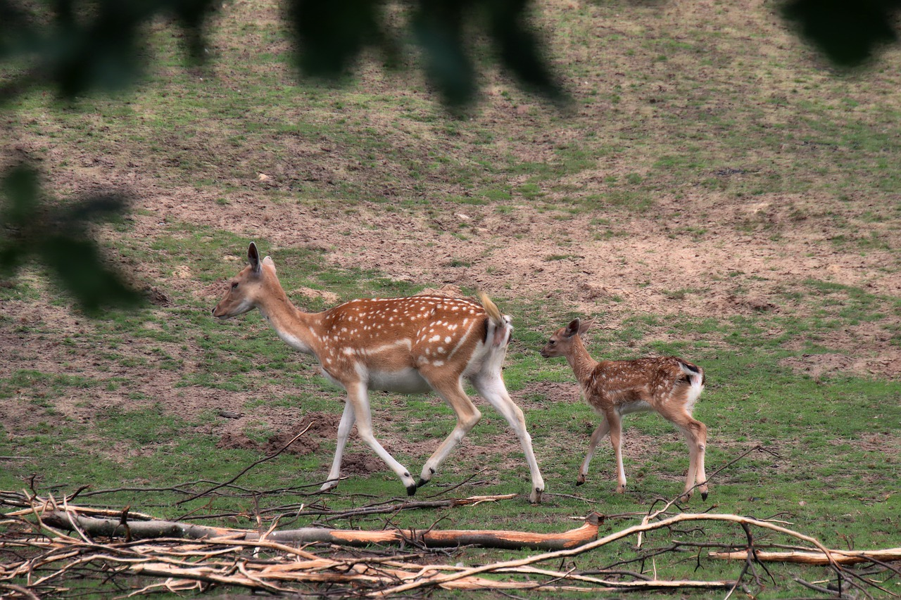 Nice Place to See in Bolpur-Ballavpur Wildlife Sanctuary
