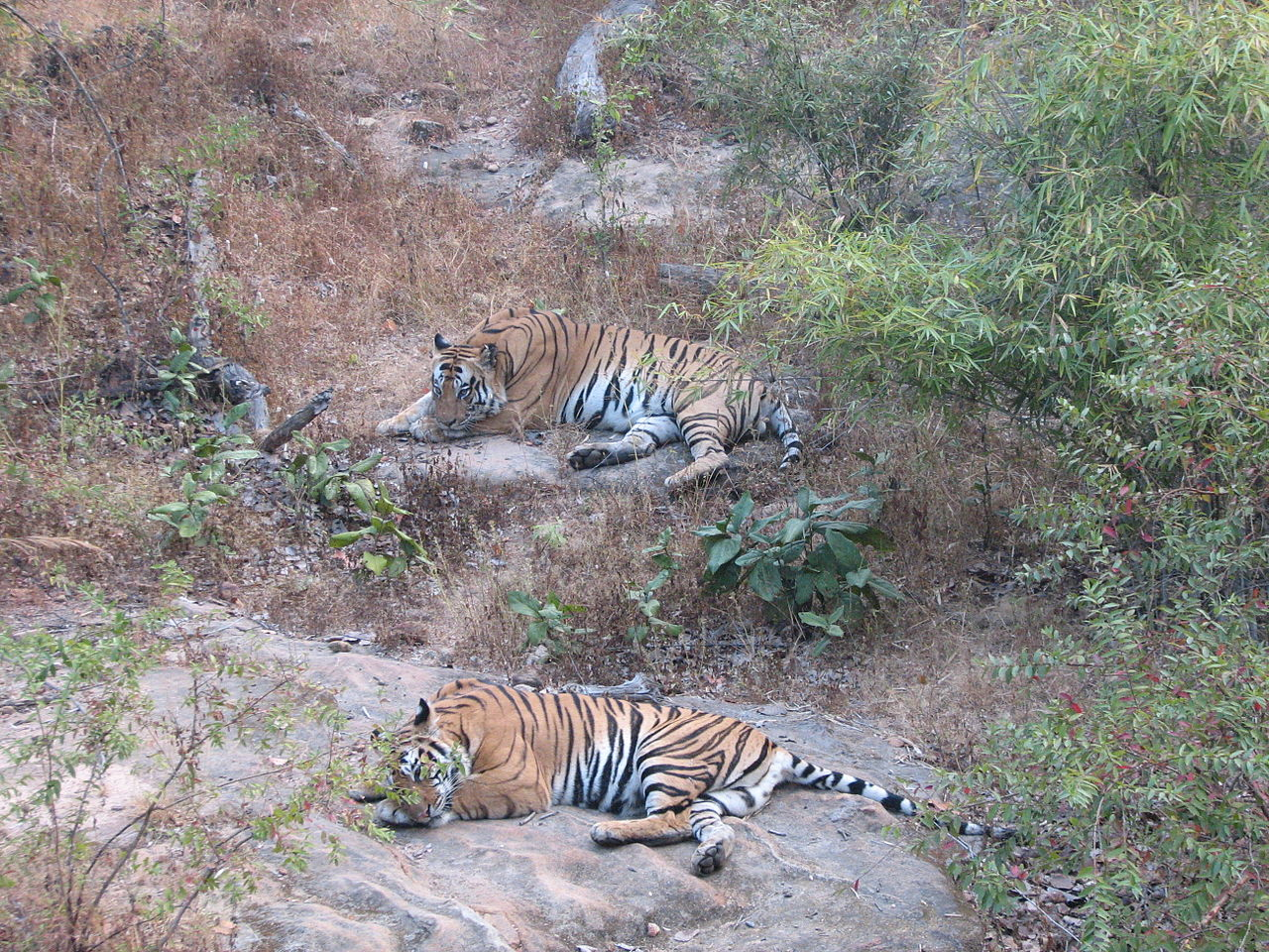 Beautiful Weekend Trip Near Jabalpur-Bandhavgarh
