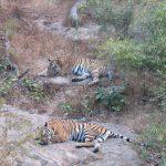 Bandhavgarh National Park - Wonder Into The Wilderness