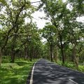Road in Bandipur National Park