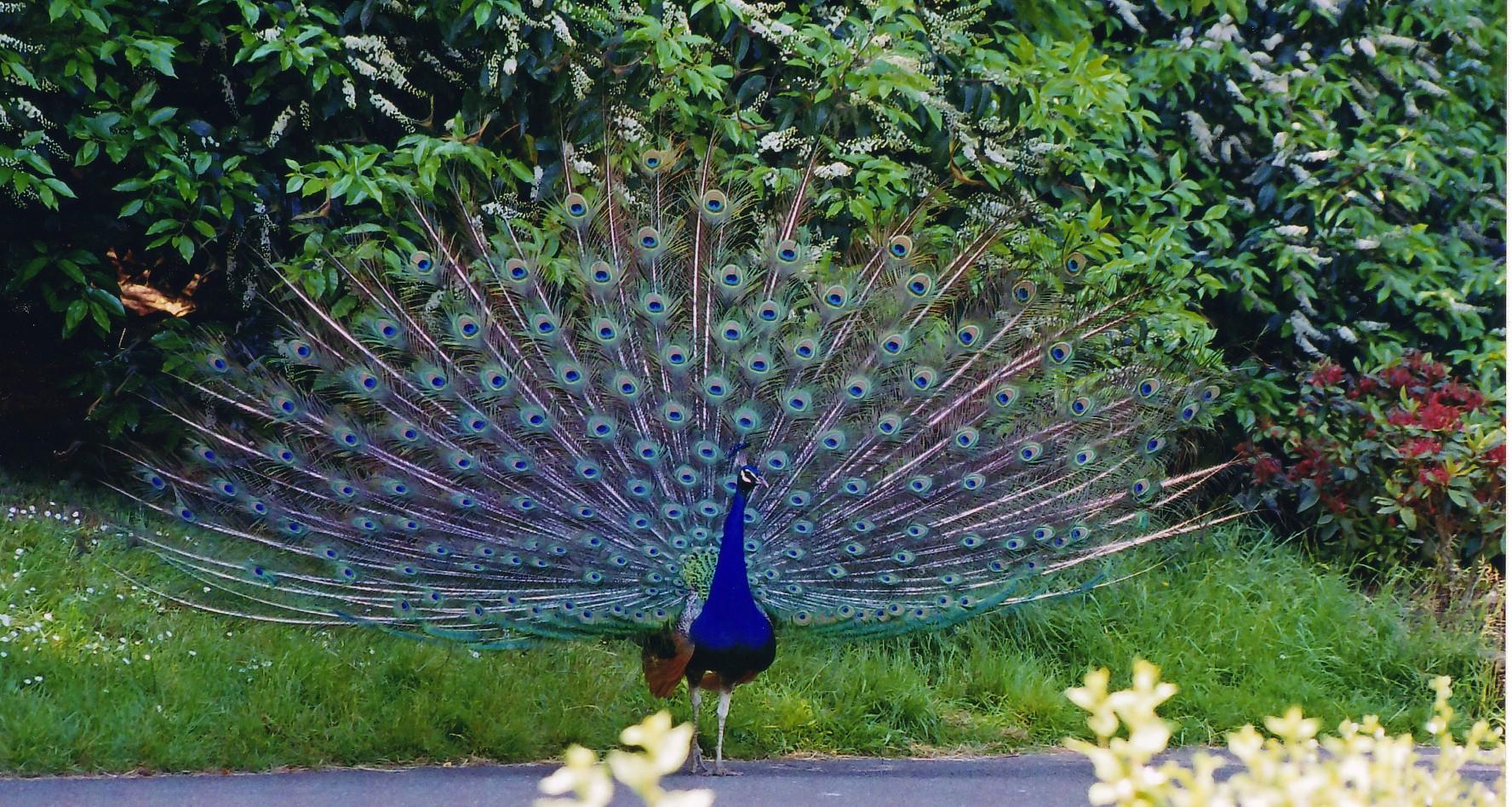 Beautiful Place To See Near The Mukteswara Temple, Haveri-Bankapura Peacock Sanctuary