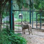 Bannerghatta Biological Park in Bengaluru