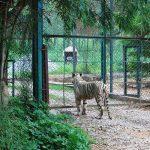 Bannerghatta Biological Park in Bengaluru