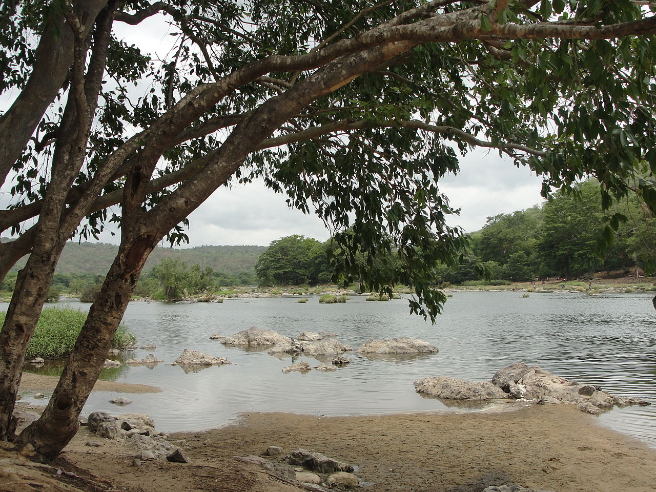 Best Time To Visit The Cauvery Wildlife Sanctuary, Muthathi