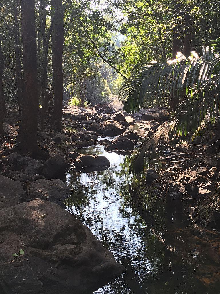 Top-Rated National Park to Visit in Goa-Bhagwan Mahavir National Park