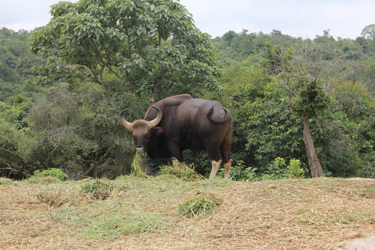 Top-Visit wildlife sanctuary in Chhattisgarh-Bhoramdeo Wildlife Sanctuary
