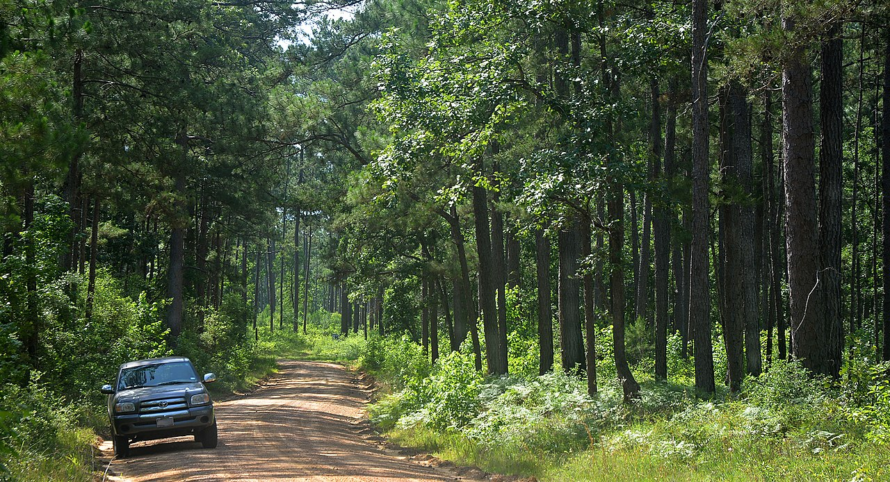 Amazing Hiking Locations In Texas-Big Thicket Hiking Trail