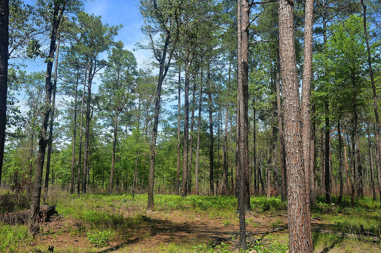 Famous Hiking Spot in Houston-Big Thicket