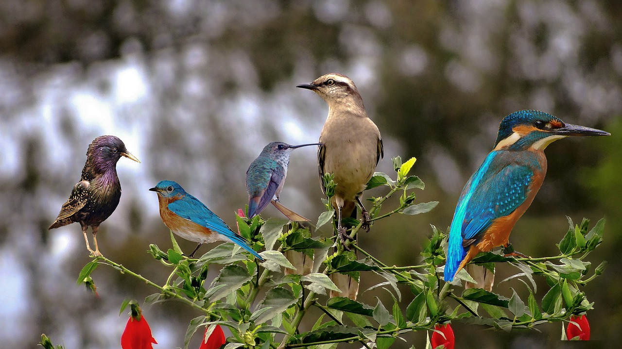 Best Things To Do At The Manas National Park-Bird Watching