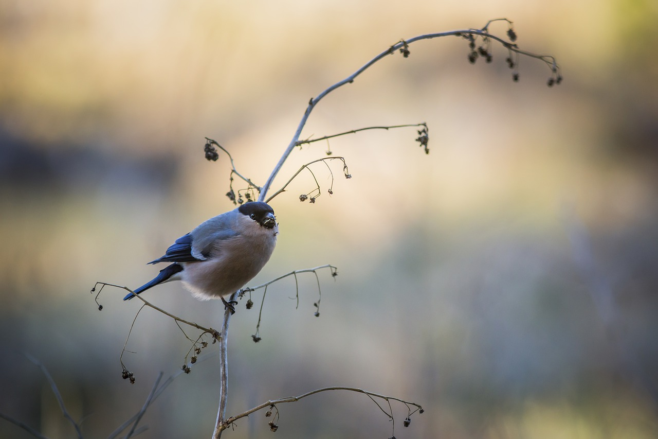 Top Activities To Do In This National Park-Bird Watching