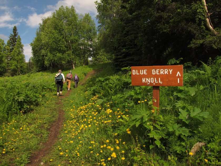 Famous Park & Hiking Trail To Visit In Alaska-Blueberry Knoll Hike