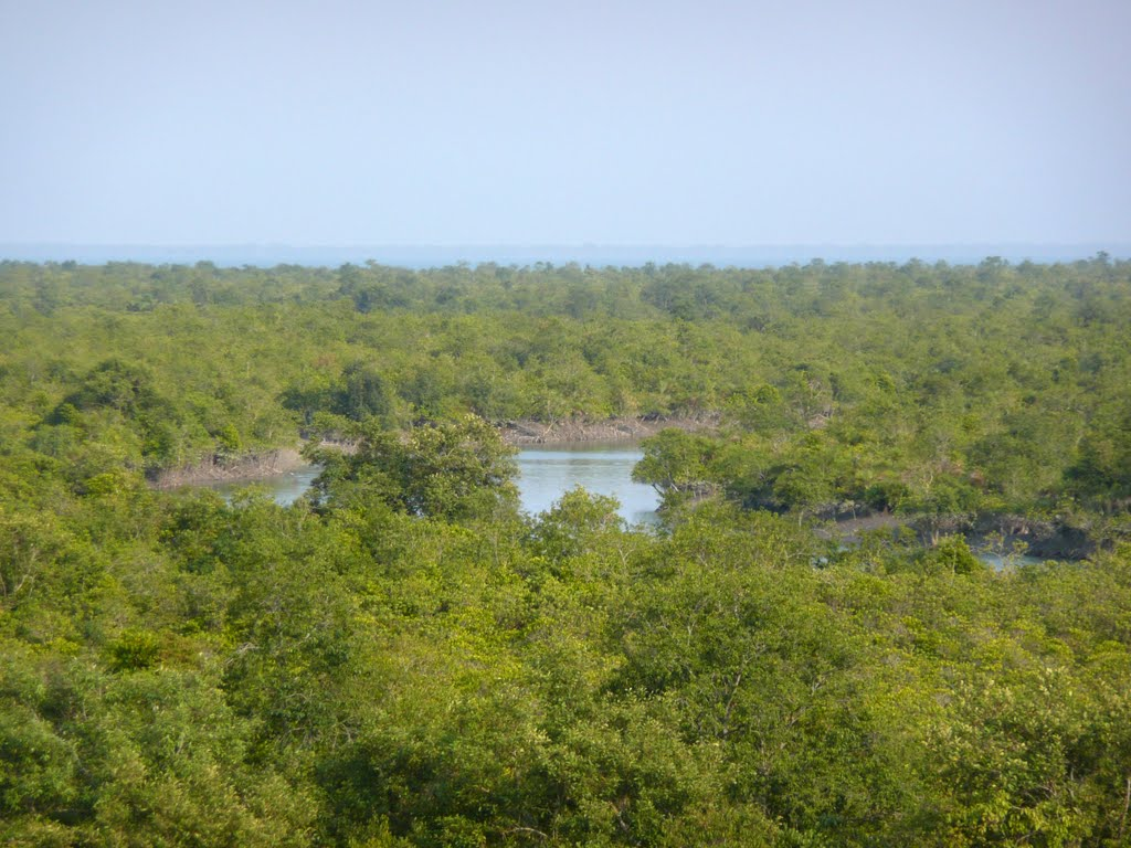 Best Place To Visit In Sundarban-Bonnie Camp