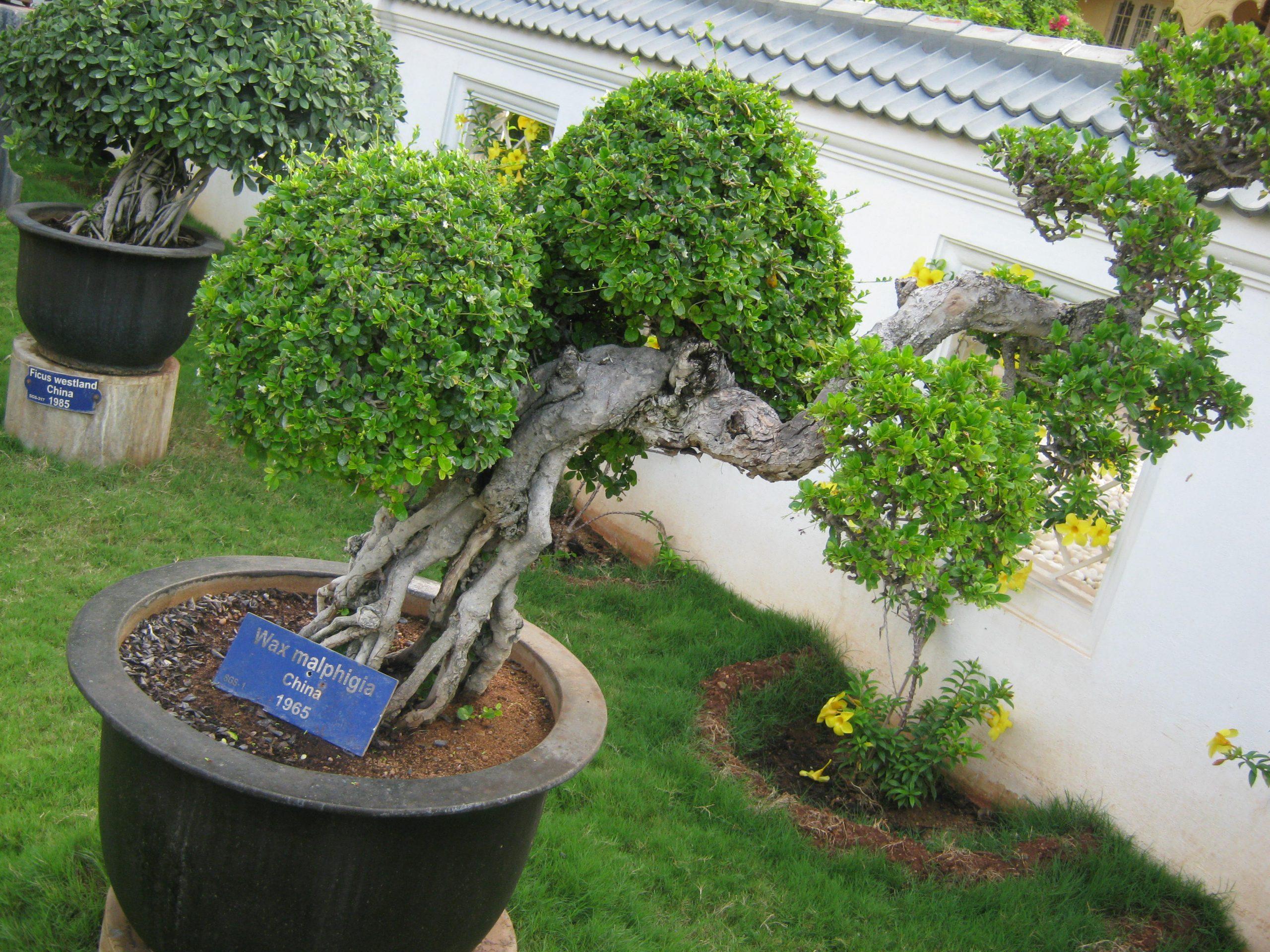 Bonsai Garden Must Visit When In Mysore