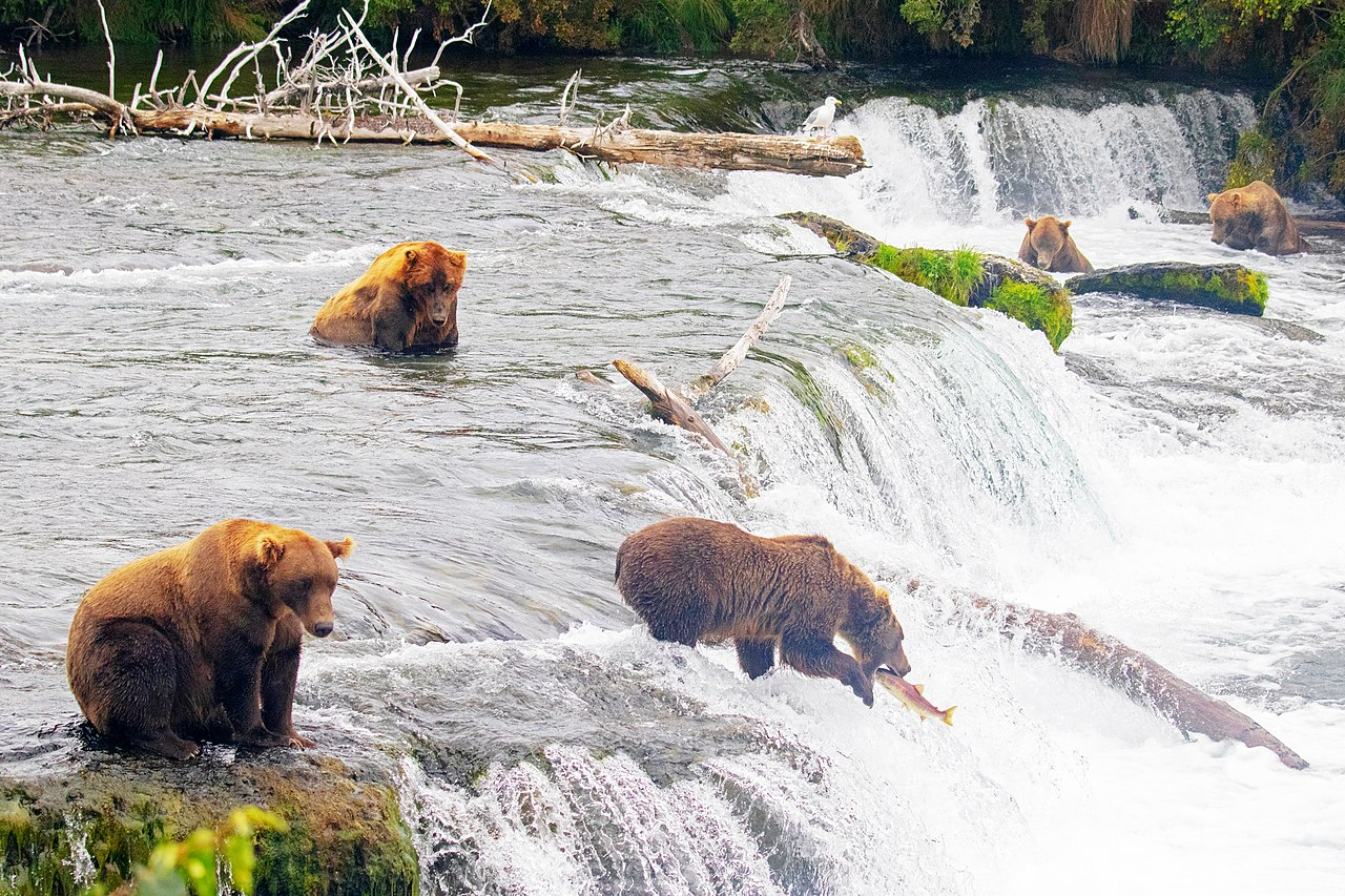 Brook Falls, Katmai National Park - Beautiful Waterfalls Location in Anchorage