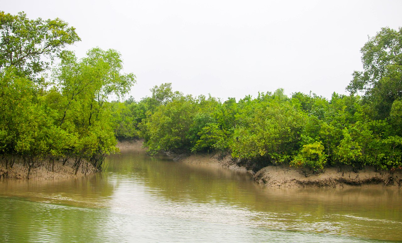 Best Place To Visit In Sundarban-Burir Dabri