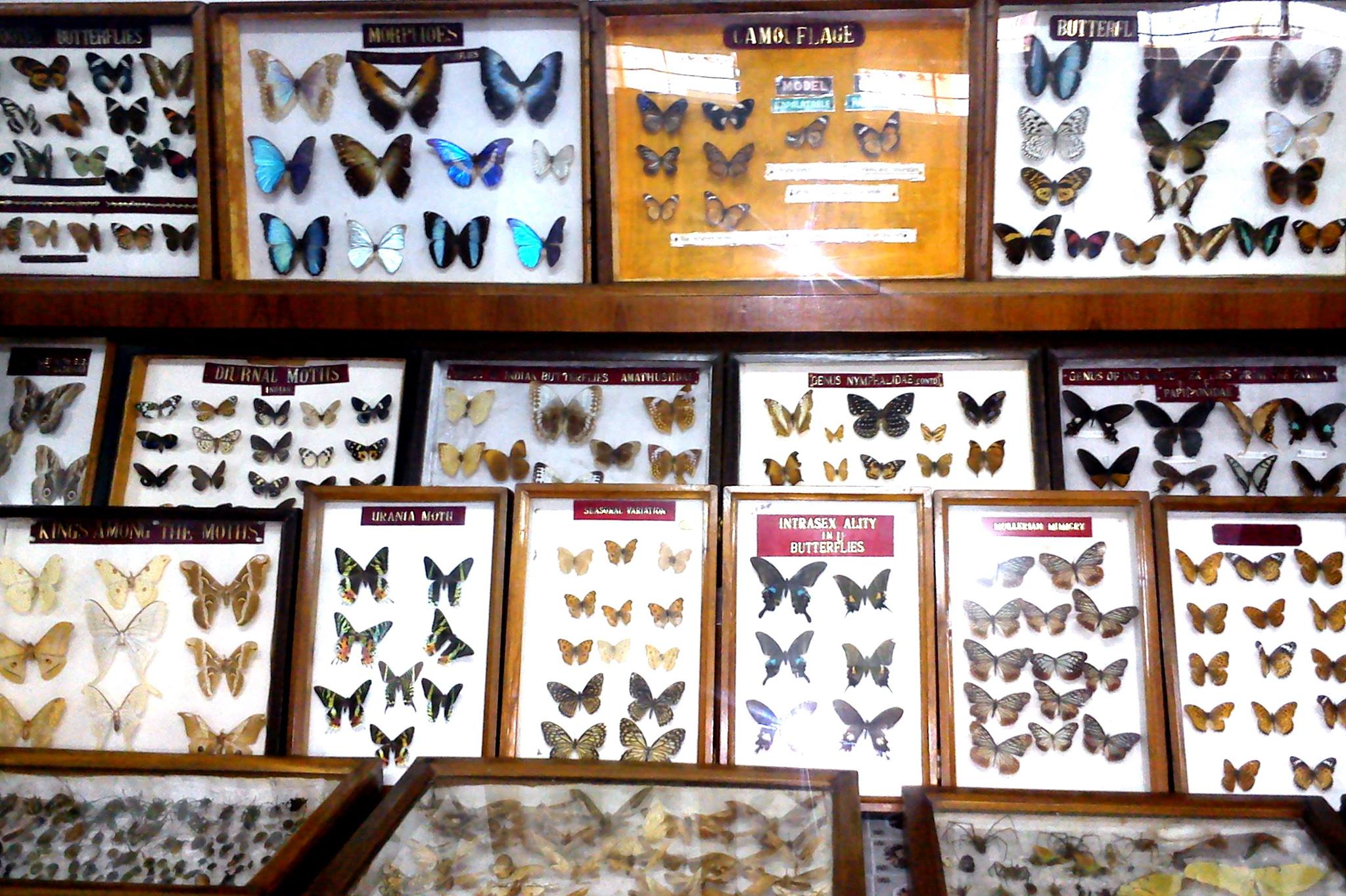 Top Attraction Near Umiam Lake-Butterfly Museum