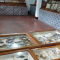 Visit Butterfly Museum or Wankhar Entomology Museum Shillong