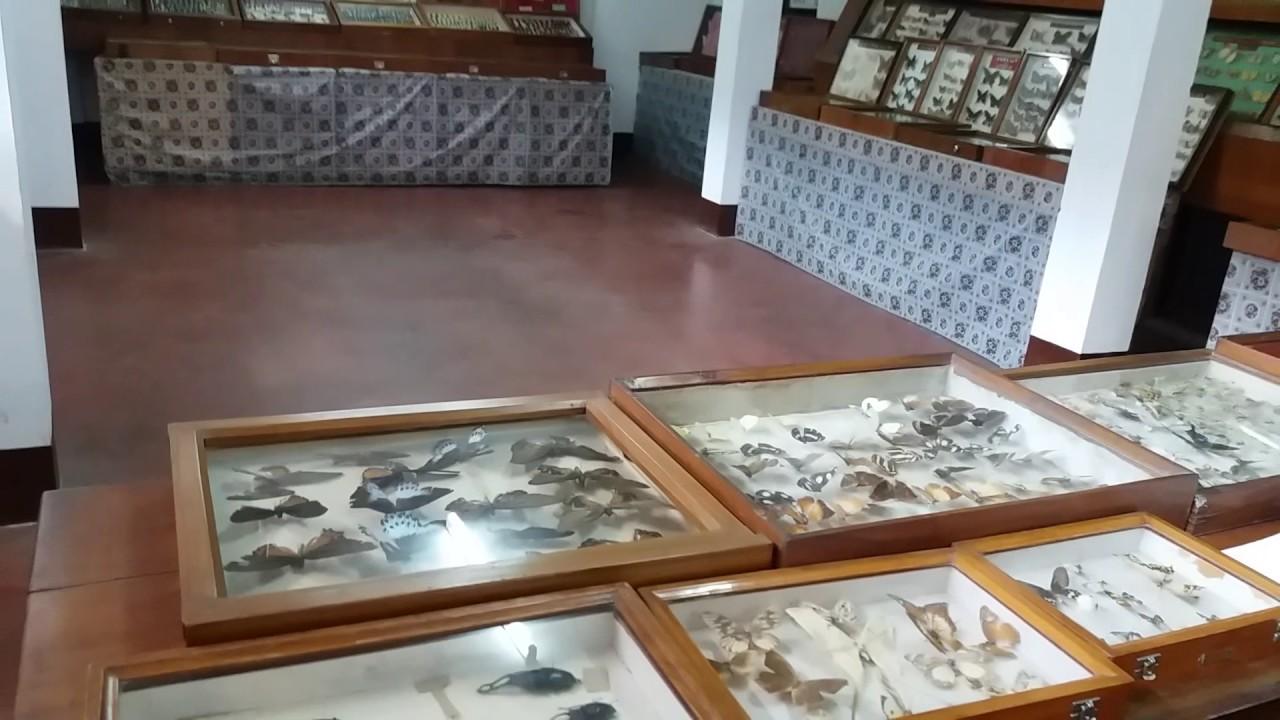 Visit Butterfly Museum or Wankhar Entomology Museum Shillong