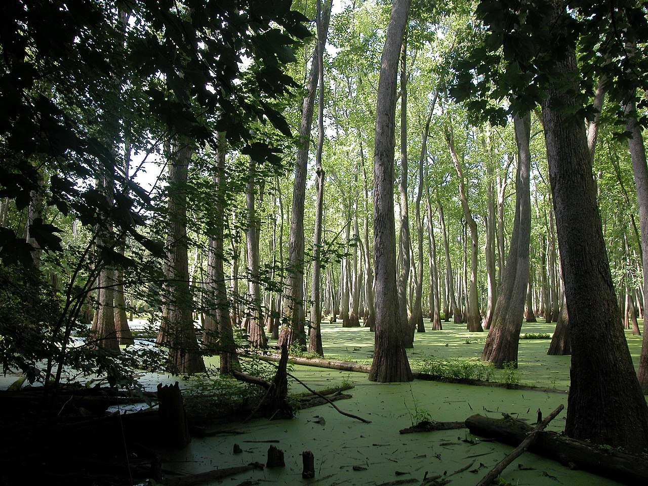 Outdoor Adventures In Illinois - Cache River State Natural Area