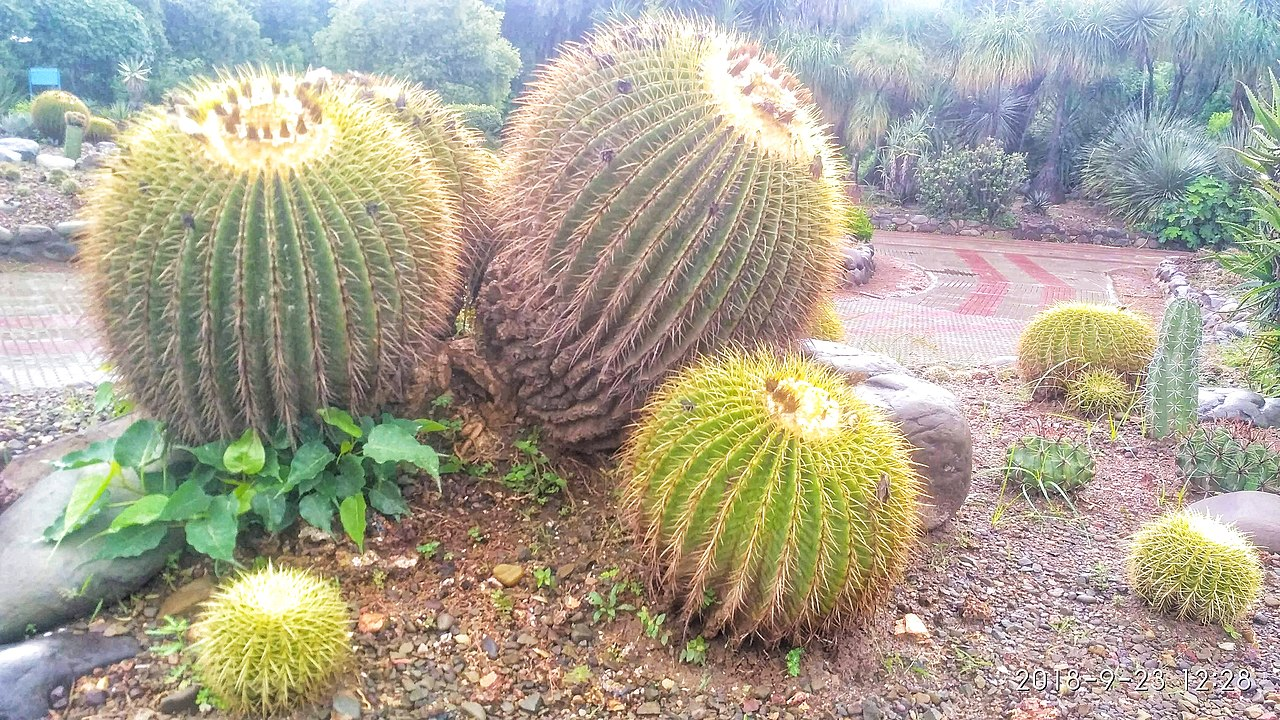 Amazing Sightseeing Destination in Panchkula-Cactus Garden