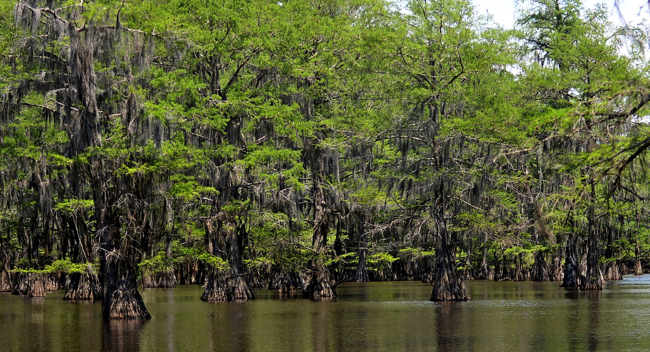 Beautiful Camping Spot In Texas-Caddo Lake State Park