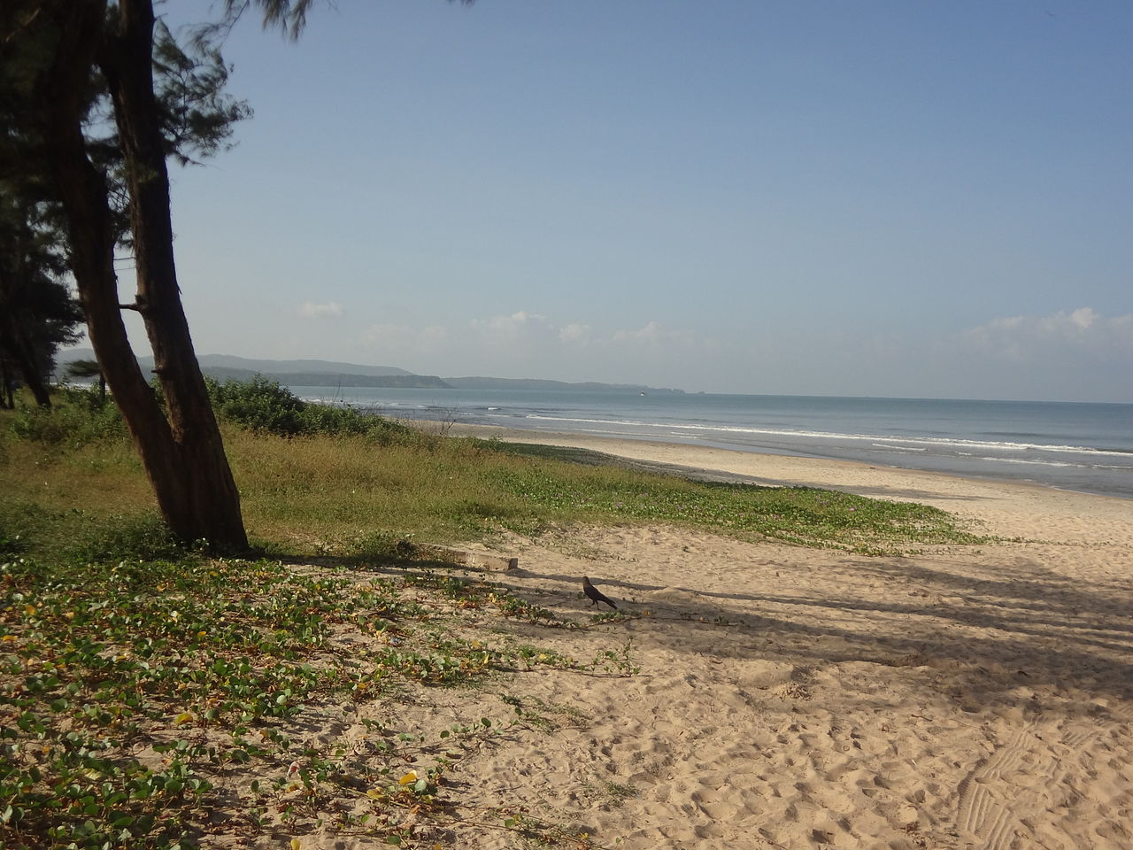 Top Beach in Goa For Watching Dolphins-Cavelossim Beach